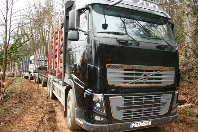 Las cargas de troncos se preparan junto a la pista forestal, en la misma cuneta.