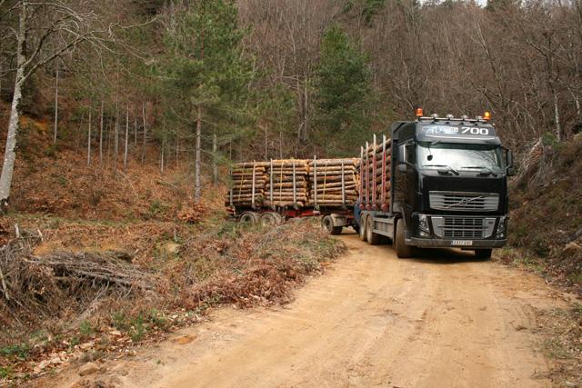 Sorprende la maniobrabilidad de estos pesados trenes de carretera de 57 toneladas a través de las pistas forestales.