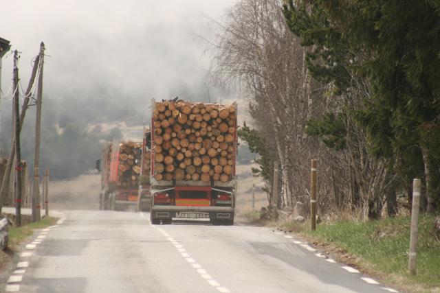 Muchas toneladas de madera y  cerca de 2.500 CV en su conjunto, el convoy de los leñadores extremos.